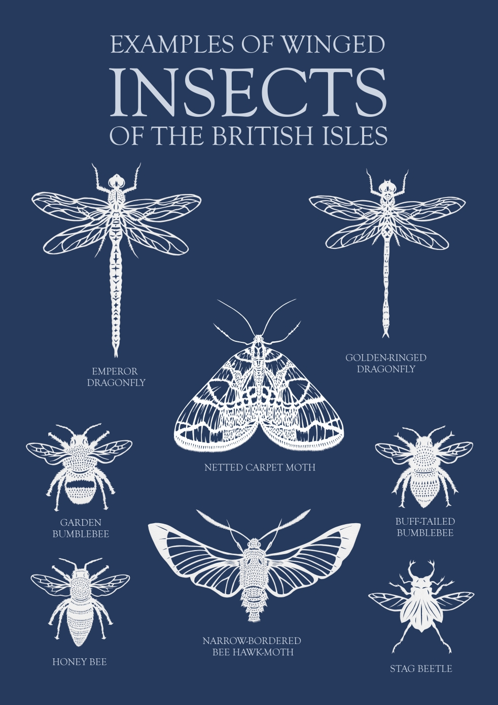 Insect poster final