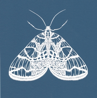 Netted Carpet Moth small