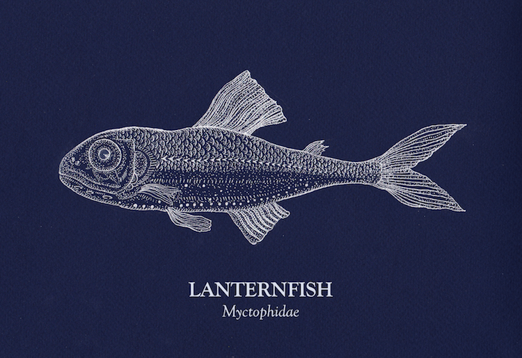 Small Lanternfish