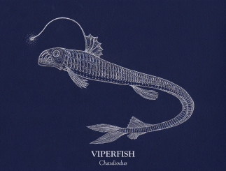 Viperfish_small